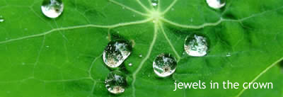 Jewels in the crown. A leaf with sparkling dew drops on it representing small jewels.